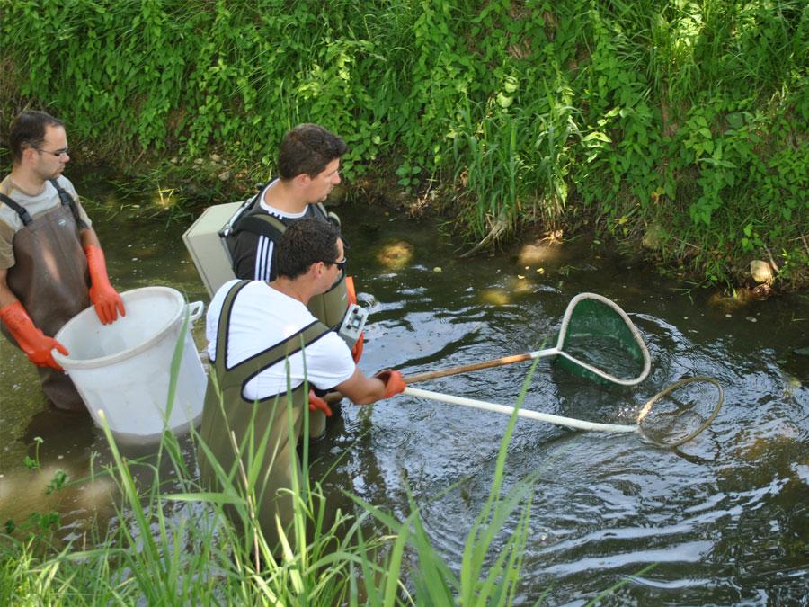 Pêche électrique sur la Luire à la Vervolière