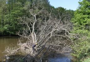 Le SIAG intervient sur la végétation des berges