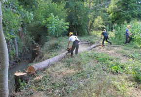 Réalisation des travaux de restauration sur le ruisseau du Ris