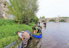 Arrachage de la Jussie sur la Gartempe à Saint-Savin en partenariat avec le Lycée agricole de Montmorillon
