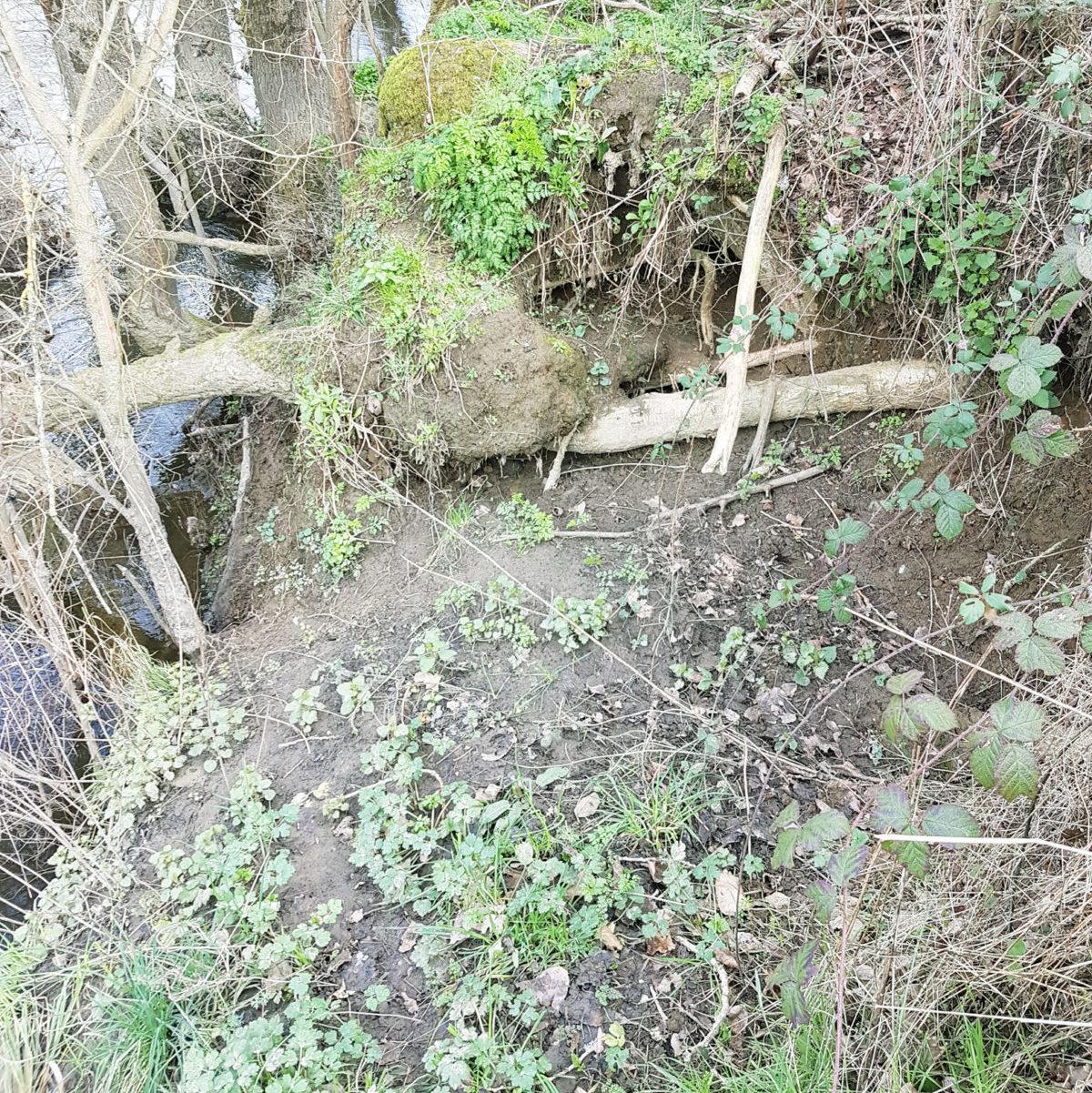 Erosion de la berge à Saint Germain